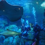 2月・3月開催!水族館ダイビング&温泉&美味しいもんツアーin大分