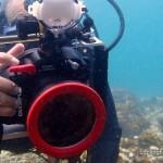 水中写真ダイビングに挑戦!