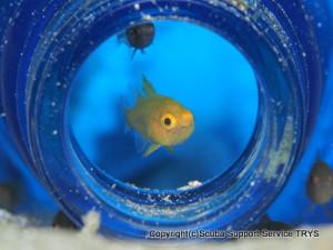 瓶の中の黄色の魚