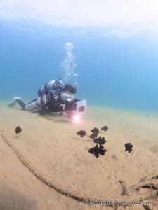 水中カメラの撮影風景