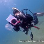 水中写真ダイビングに挑戦! 『トライ フォトダイビング』