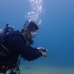 和歌山ブルーの海でマンツーマン ダイビング!